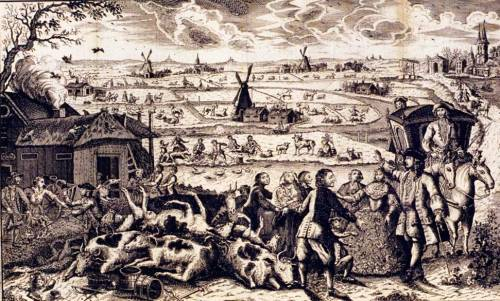 Rinderpest outbreak in 18th Century Netherlands Source: Wikipedia  Public Domain