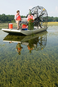 Hydrilla verticillata collection on Lake Seminole, FL. Common domain.  Stephen Ausmus, USDA